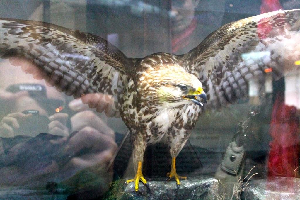 stuffed falcon