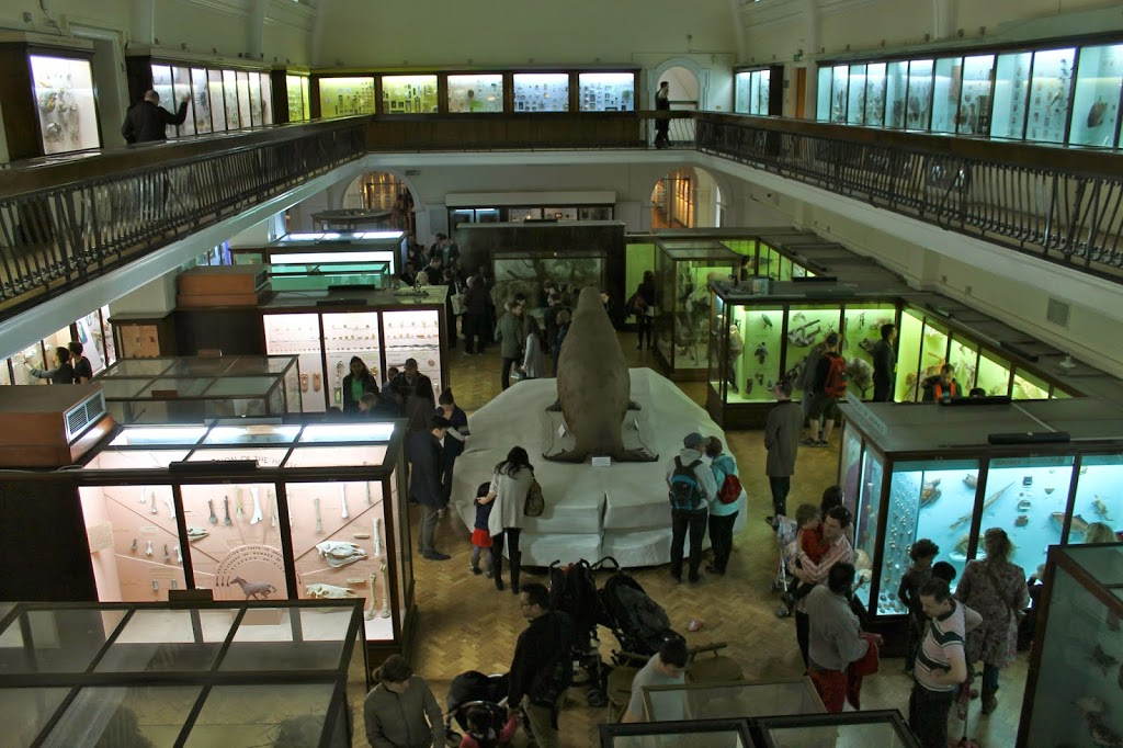 view of the natural history gallery