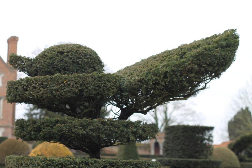 duck bush