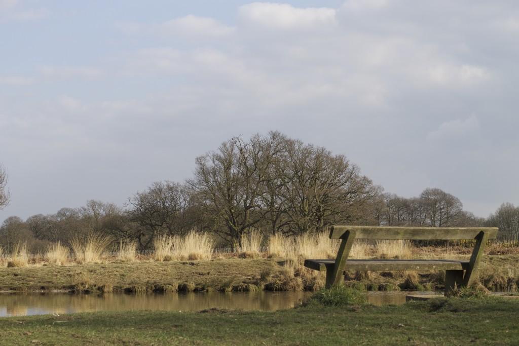 richmond park pond