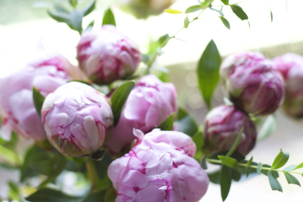 close up of peonies