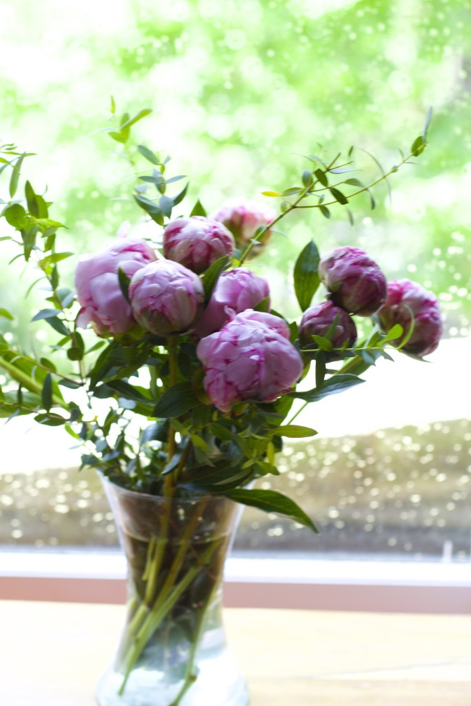 peonies in the window