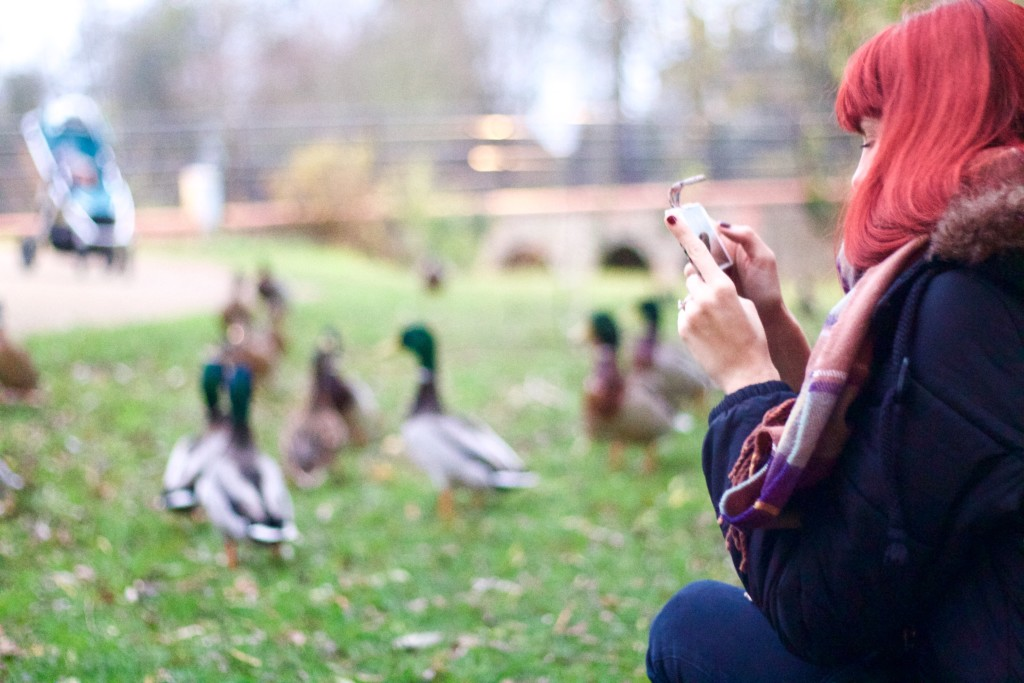 taking photos of ducks