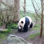 Travel || Edinburgh Zoo