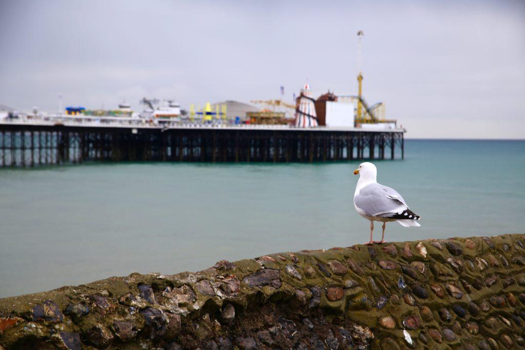 pier and a bird