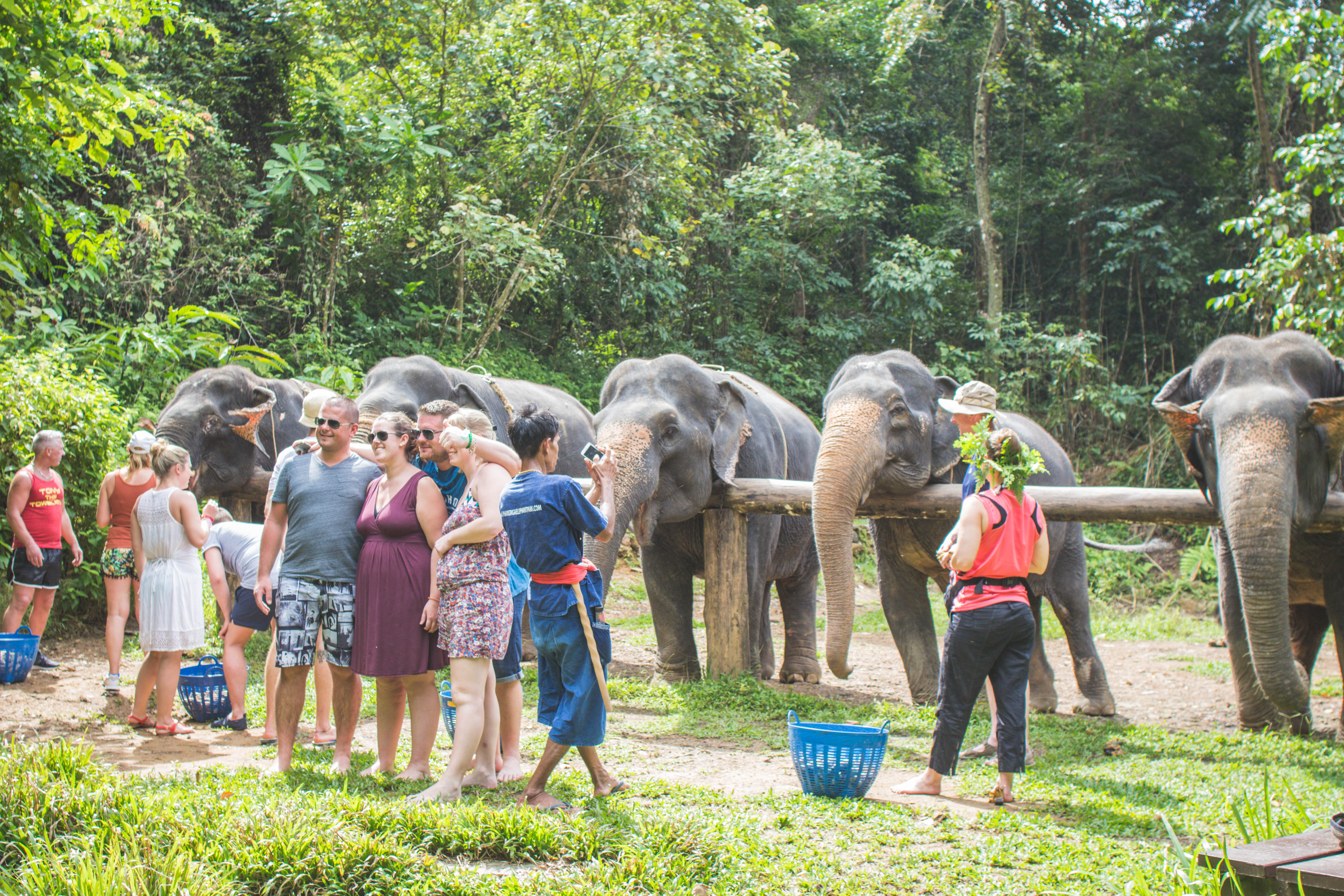Travel  Phang Nga Elephant Park - Rhyme & Ribbons