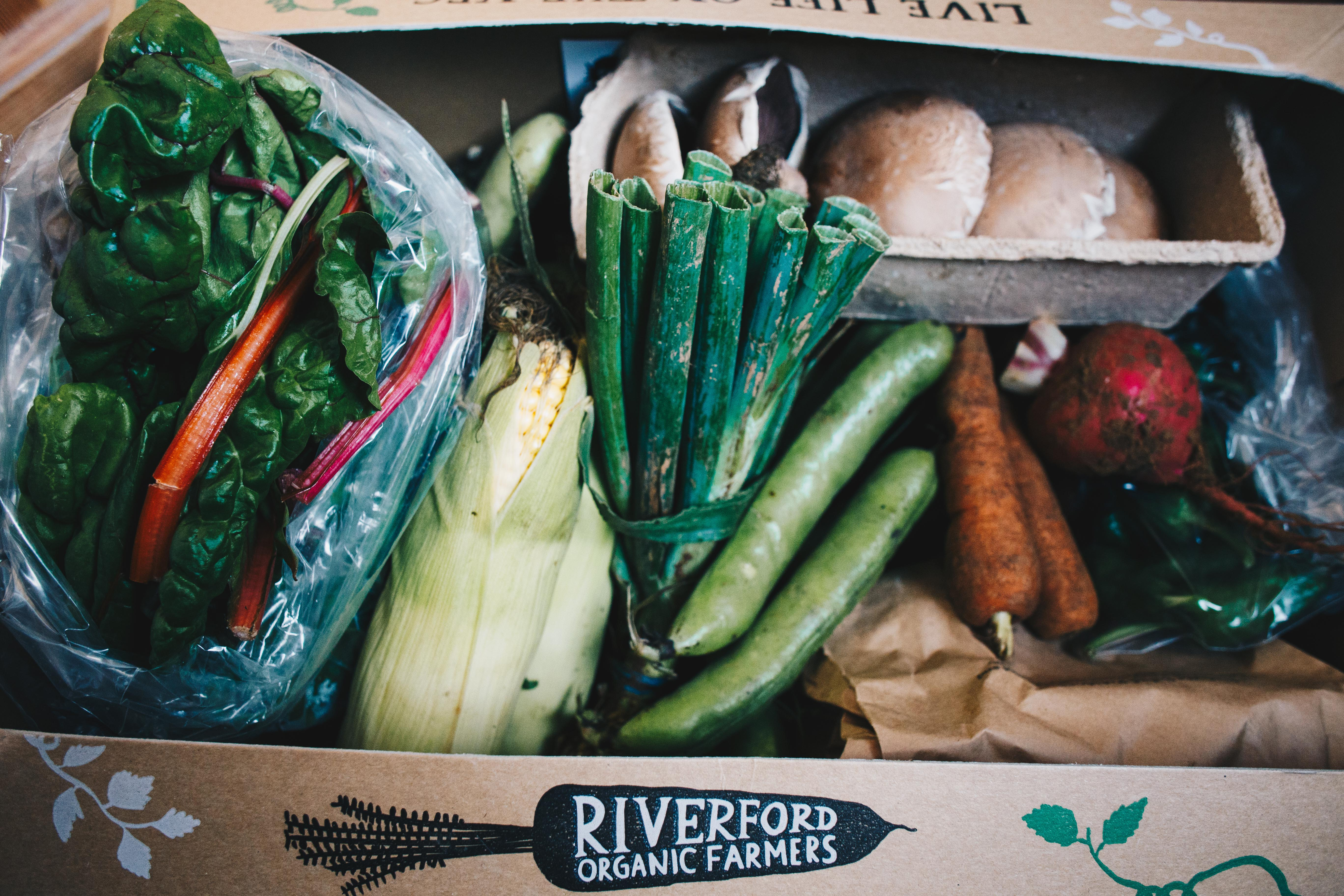 riverford vegetable box July