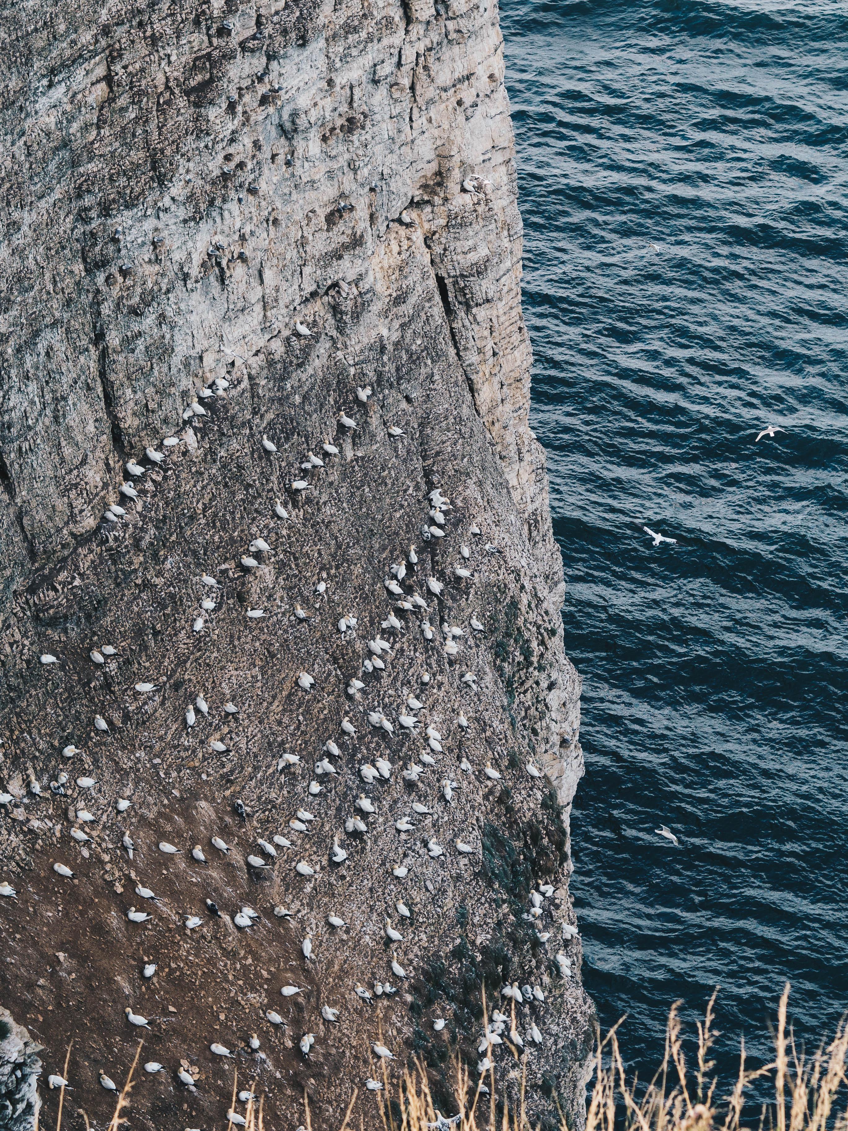 birds nest on cliff