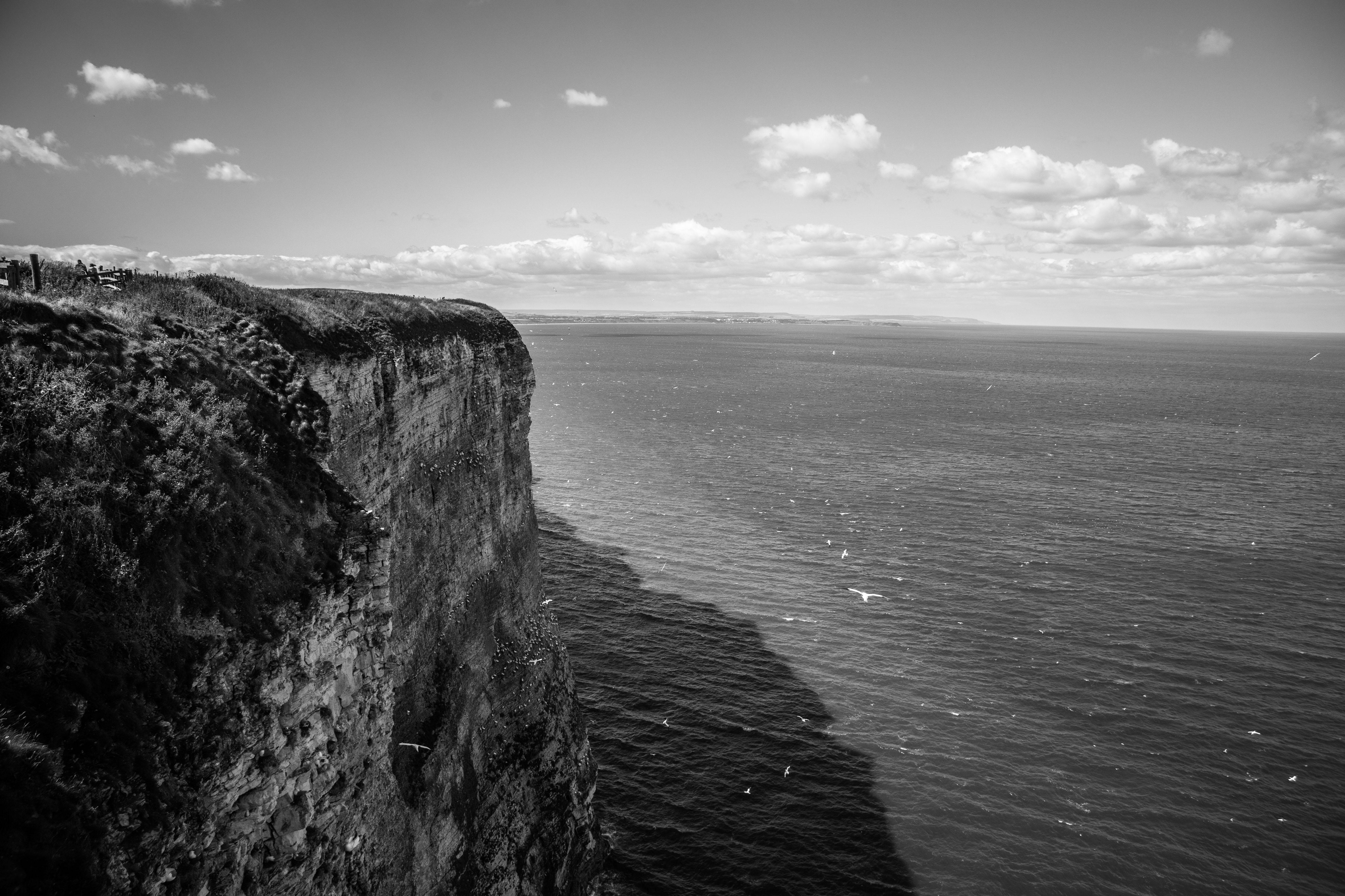 gorgeous bempton cliffs black and white
