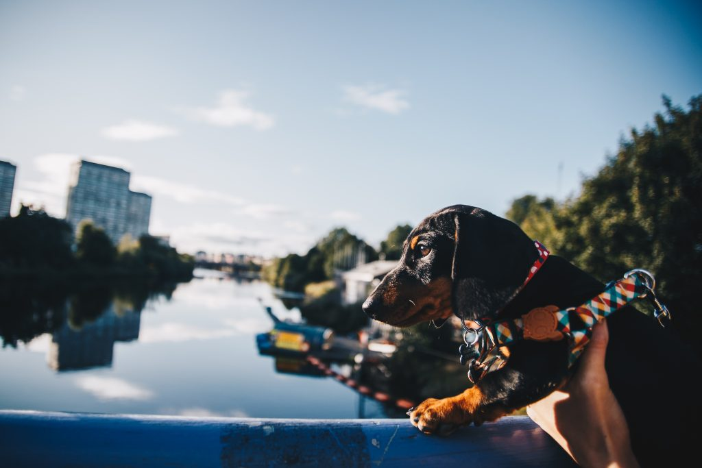 dog-friendly guide to glasgow
