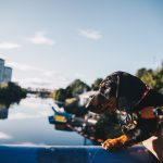 Travel || A Dog-Friendly Guide to Glasgow