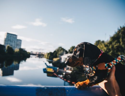 dog-friendly guide to glasgow