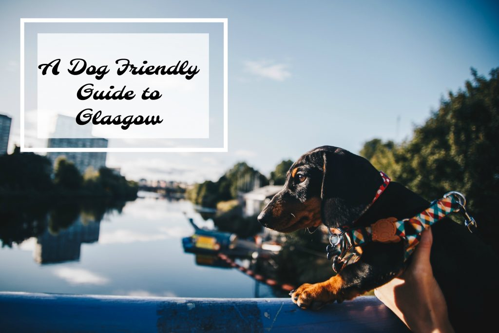 pin it dog-friendly guide to glasgow