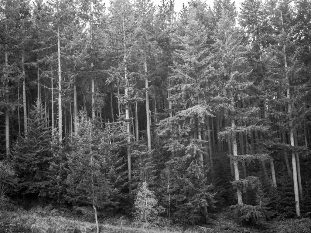 dalby forest black and white
