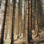 Travel || Dalby Forest