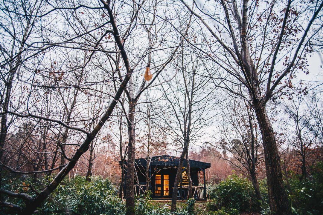 amy johnson cabin