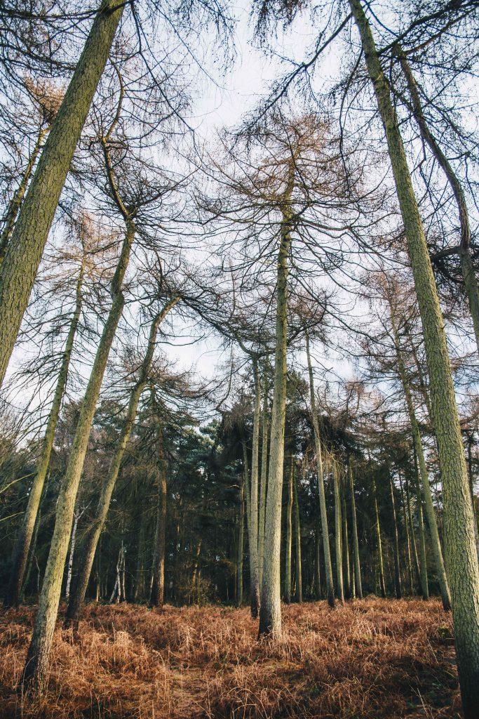 houghton wood
